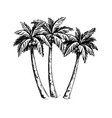 palm sketch hand drawn vector image vector image