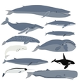 Whales vector image vector image