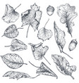 collection hand drawn dry autumn leaves vector image vector image