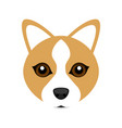 cute welsh corgi dog avatar vector image