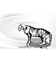 tiger and water vector image vector image