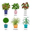 cartoon houseplants in pots vector image vector image