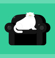 fat white cat on soft armchair thick big pet on vector image vector image