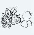 Strawberries with leaves vector image vector image