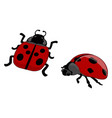 two red ladybugs on white background vector image vector image