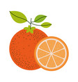 white background with one orange fruit and orange vector image
