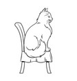 female cat sits on chair coloring book vector image vector image