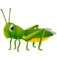 green grasshopper on white background vector image