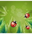 green leaves design with ladybug vector image vector image