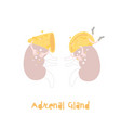 healthy adrenal gland cartoon character in trendy