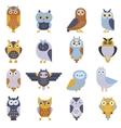 Cartoon cute owl vector image