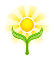 Sun above two green leaves vector image