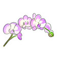 the watercolor of bouquet a vector image vector image