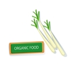 Three Plants Of Shallot Fresh Organic Vegetables vector image vector image