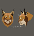 two portraits of lynx vector image vector image
