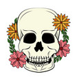 cool skull print for tshirt vector image vector image