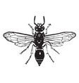 potter wasp vintage vector image vector image
