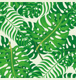 tropical leaves on a green background vector image
