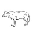 outline wolf icon vector image