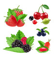 realistic garden and wild berries blackberry vector image vector image