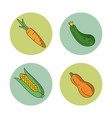 white background with vegetables carrot zucchini vector image vector image