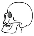 linear sketch of the skull in profile vector image