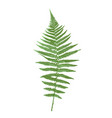 naturalistic picture fern vector image vector image