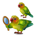 parrot lovebird admiring her own reflection in the vector image vector image