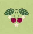 ripe cherry with leaves vector image