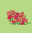 sketch style line-art pink orchid flowers vector image vector image