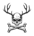 vintage monochrome skull with deer horns vector image