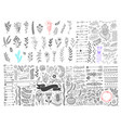 mega set hand drawing page dividers borders and vector image vector image