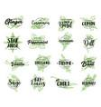 organic herbs spices seasonings sketch lettering vector image