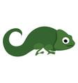 green chameleon on white background vector image vector image