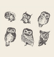set drawn owls vintage style vector image