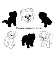 set pomeranian spitz collection pedigree vector image vector image