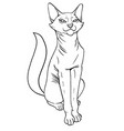 abyssinian pretty cat sitting vector image
