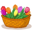 flower tulips vector image vector image
