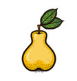 hand drawn colored sketch fruit pear isolated vector image vector image