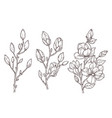 magnolia sketch art floral blossom branch and vector image vector image