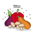 colorful poster fresh vegetables eggplant peppers vector image vector image