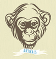 Hand drawn portrait of monkey chimpanzee vector image vector image