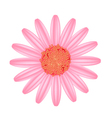 Old Rose Daisy Flower on A White Background vector image vector image