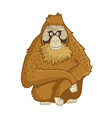 orangutan monkey isolated wild brown ape vector image