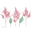 set hand drawn pastel astilbe vector image
