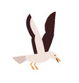 simple style colorful portrait flying seagull vector image