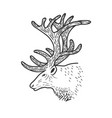 beautiful deer vector image