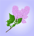 Lilac twig with flowers and leaves vector image