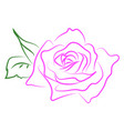 pink rose drawing on white background vector image vector image
