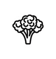 broccoli icon vector image